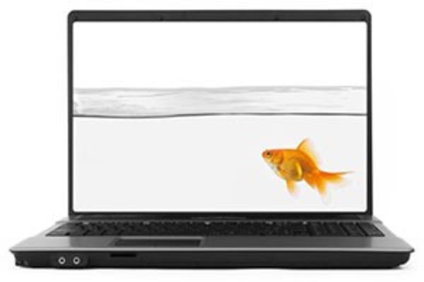 Laptop with goldfish on monitor representing phishing